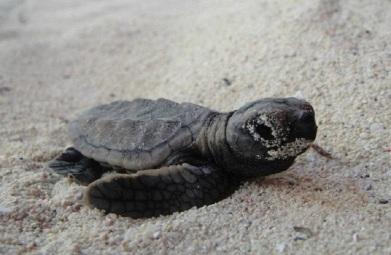 santuario de tortugas