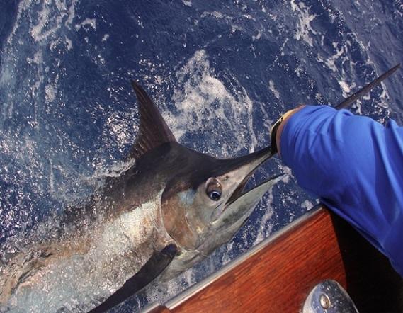 pesca punta cana pedrito