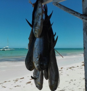 pescar en punta cana