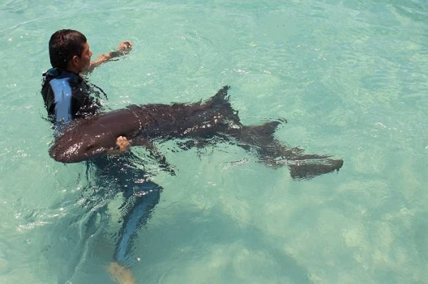 tiburon-gato