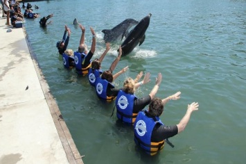 nado con delfines pedrito punta cana