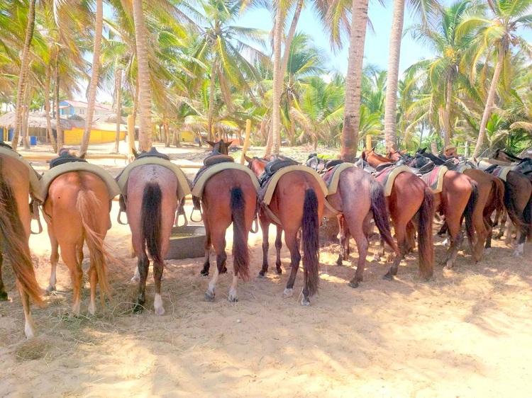 paseo a caballo en punta cana