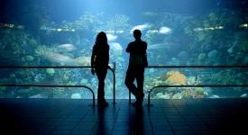 acuario-3