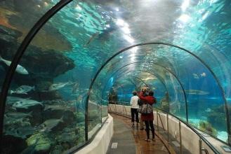 acuario-5