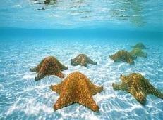 piscinas pedrito punta cana